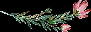 CrystalFloralElements 024 e1567088632918 300x108 CrystalFloralElements 024
