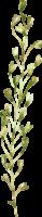 CrystalFloralElements 020ed oel1f9cz38v3vqx2ooo576jtpfmv0pvgc6l5kjx98g Team Page